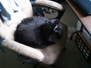 Kitteh says, no chair, no work.