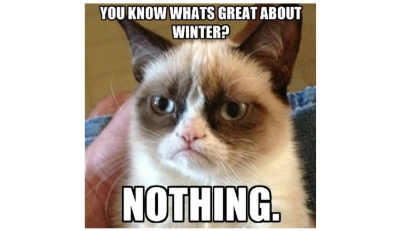 grumpycatwinter