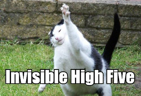 lolcat-high-5